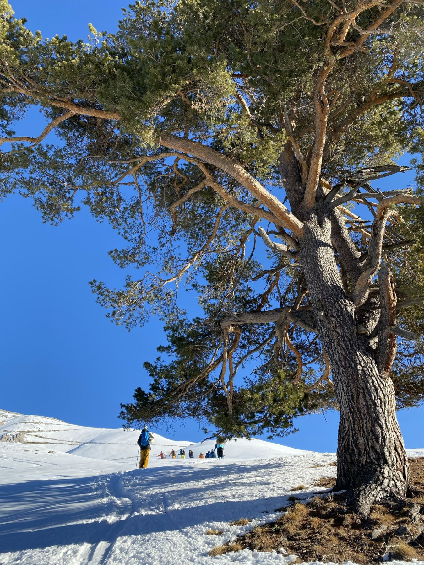 Ски-тур в Архызе