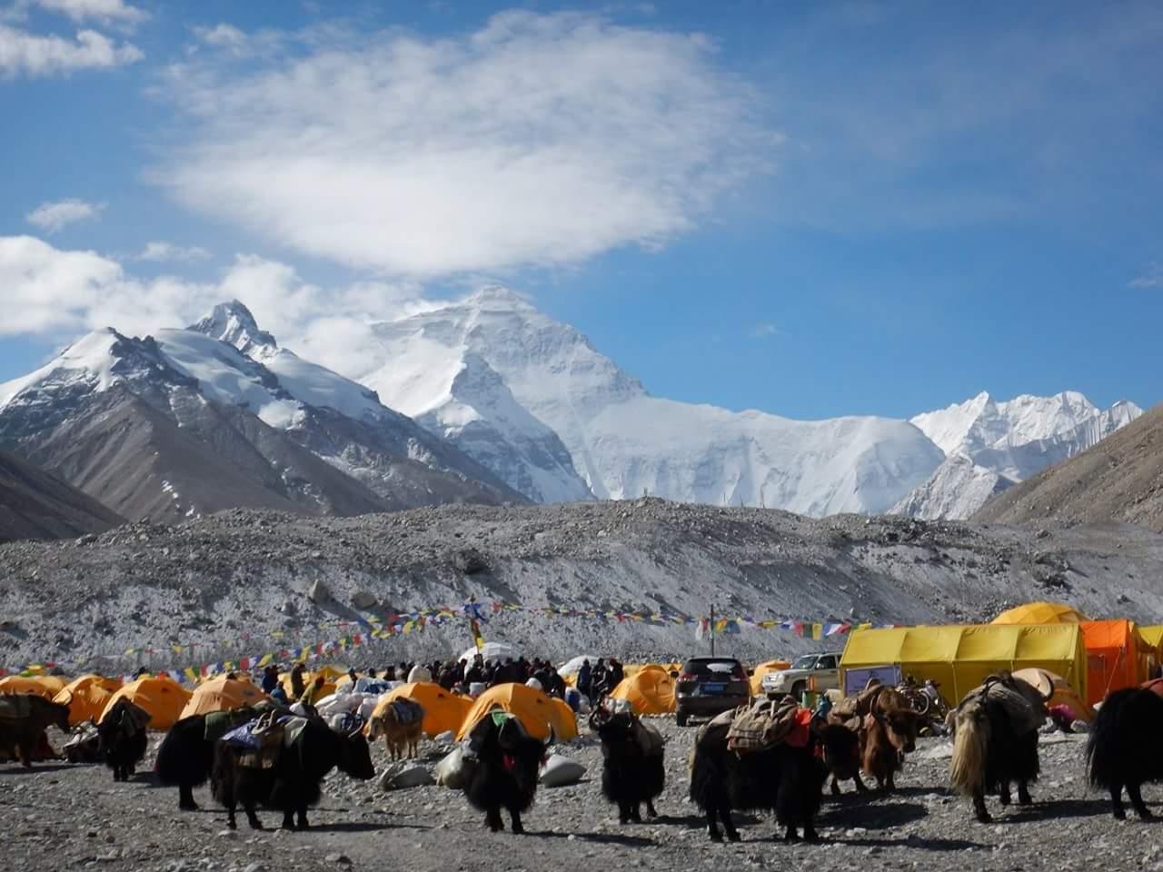 Нагруженные яки на склонах Эвереста