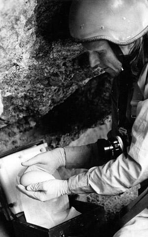 Когда в 1984 году калифорнийский кондор оказался на грани исчезновения, биолога и скалолаза Роба Роя Рамея (Rob Roy Ramey) попросили поучаствовать в важном проекте по перемещению яиц этой птицы в новые локации, чтобы сохранить её потомство.