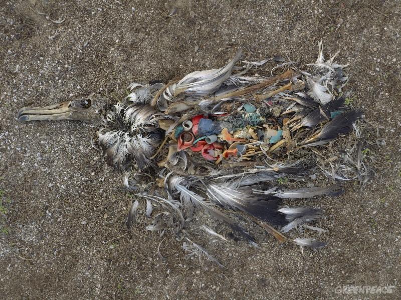 Из-за пластиковой упаковки и полиэтиленовых пакетов, попадающих в Мировой океан, ежегодно гибнет примерно миллион морских птиц и около 100 000 морских животных: китов, дельфинов, черепах, тюленей