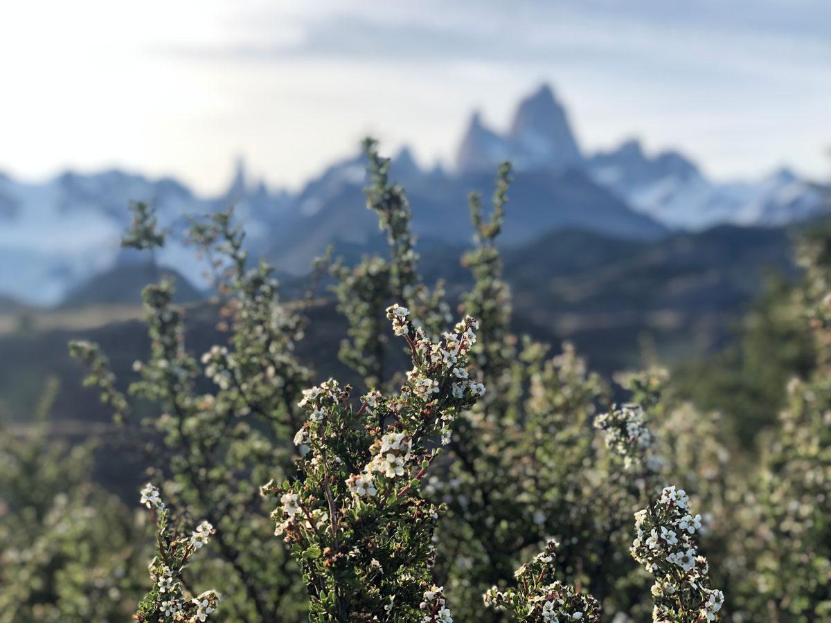 Мы побросали чемоданы и побежали разглядывать очертания горы по ближайшему треку под названием Miradores Condores.