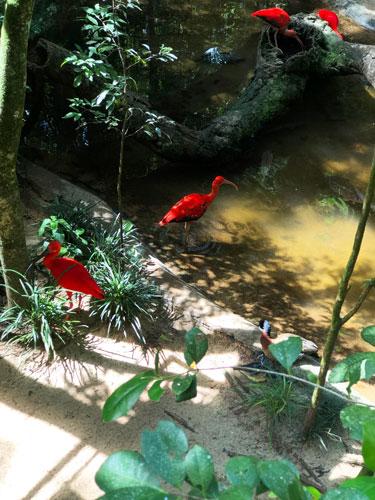 После водопадов мы сходили в Парк птиц на Бразильской стороне.