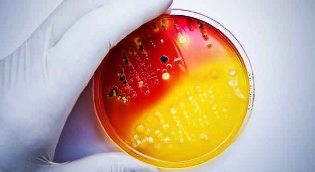 антибактериальные пропитки