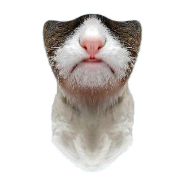 """Маска Funtomask ветрозащитная Funtomask """"Грустный кот"""" серый ONE балаклава funtomask funtomask windblock черный one"""