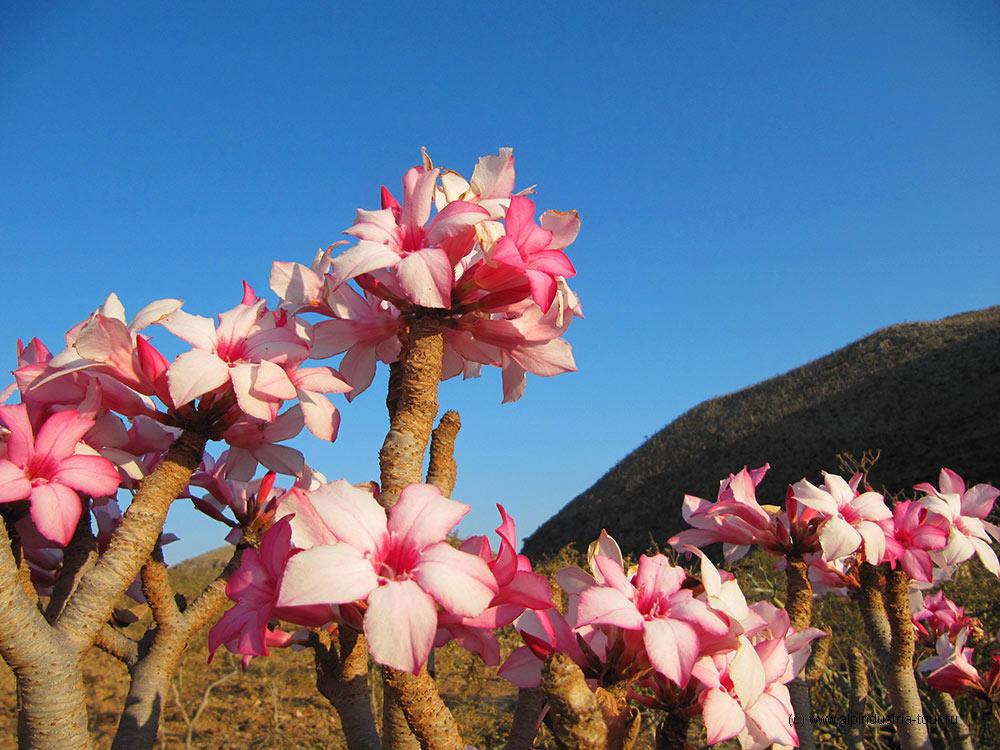 составляют лишь цветы на острове дени фото только актер, еще